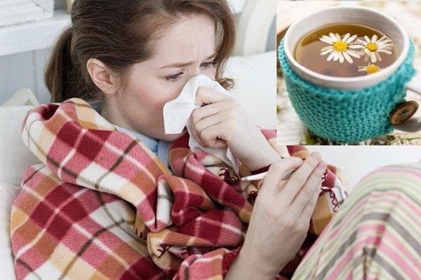Trà hoa cúc lợi sữa giúp chữa cảm lạnh hiệu quả