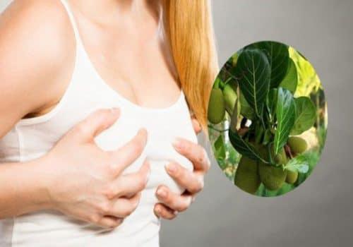 Lá mít hơ nóng giúp chữa tắc tia sữa hiệu quả