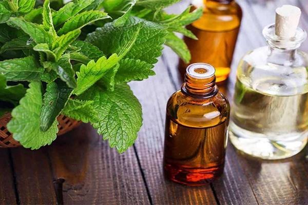 Tinh dầu chiết xuất từ loại thảo dược này rất tốt trong điều trị các vấn đề răng miệng