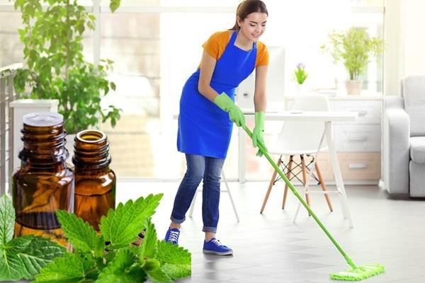 Lau nhà bằng tinh dầu bạc hà giúp đuổi muỗi và làm sạch không khí