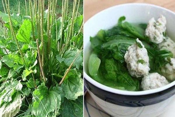 Canh rau Mã đề chứa nhiều dinh dưỡng tốt cho sức khỏe