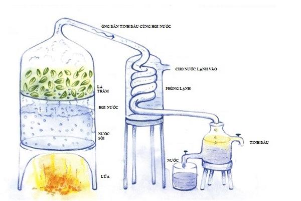 Ảnh mô phỏng quy trình chiết lấy tinh dầu tràm