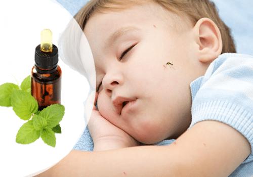 Dùng tinh dầu bạc hà để đuổi muỗi có hiệu quả không