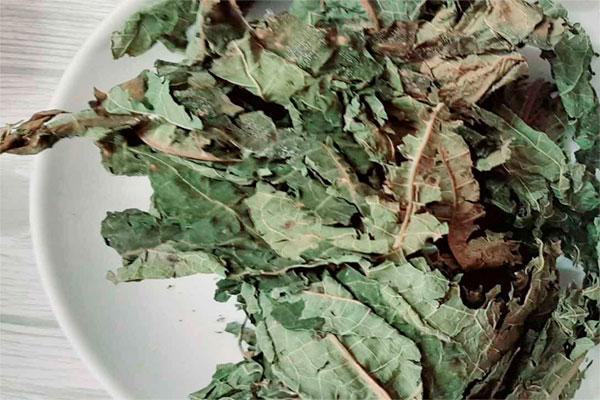 Lá đu đủ khô được bảo quản trong túi nilon kín để tránh ẩm mốc