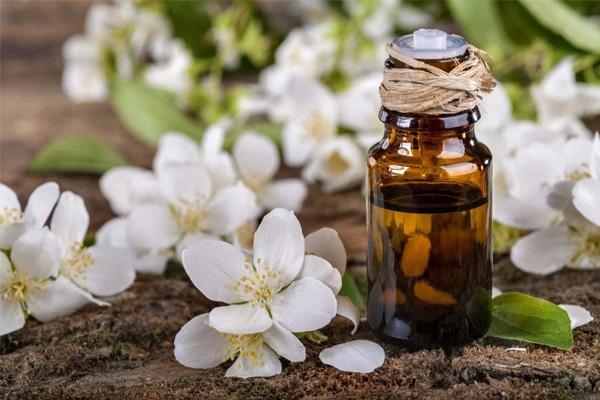 Tinh dầu hoa nhài được tách chiết bằng công nghệ hiện đại mang đến tinh dầu nguyên chất 100%