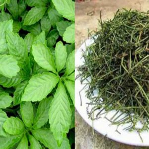 Người ta thường phơi khô thảo dược để dễ dàng bảo quản và sử dụng