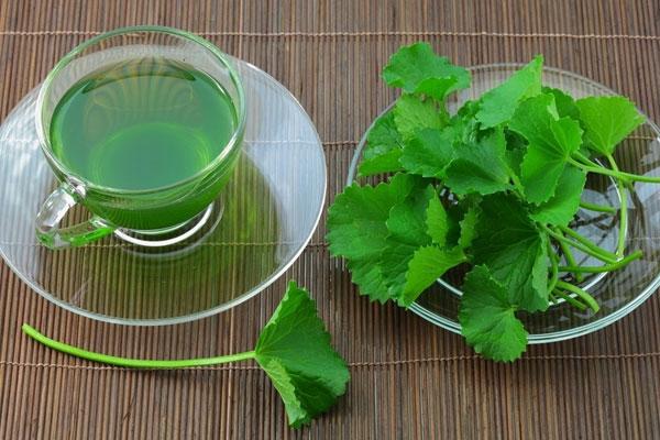Bài thuốc từ rau má giúp cải thiện tình trạng vàng da do thấp nhiệt