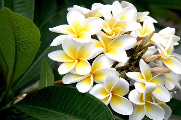 Loài hoa rất đặc trưng tại Việt Nam