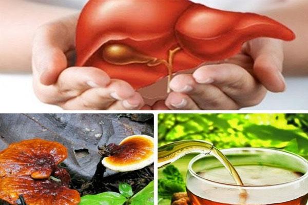 Nấm lim xanh có tác dụng chữa viêm gan, men gan tăng