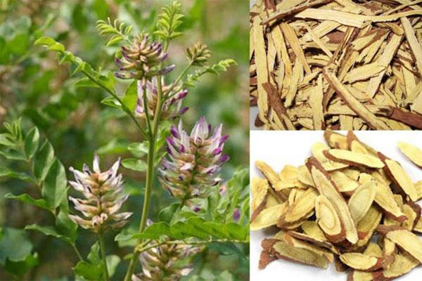 Mỗi một loại Cam thảo đều có những công dụng nhất định đối với sức khỏe