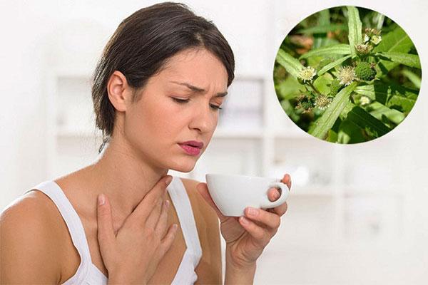 Bài thuốc từ cỏ mực giúp điều trị viêm họng hiệu quả