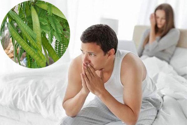 Trong số các công dụng chữa bệnh, cây keo được biết đến là thần dược chữa tiểu đường và yếu sinh lý