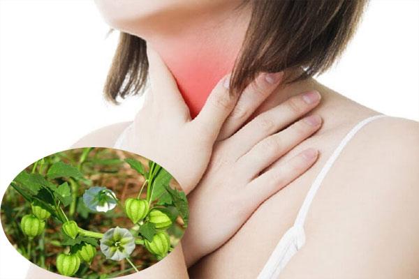 Cây tầm bốp là dược liệu chữa viêm họng hiệu quả
