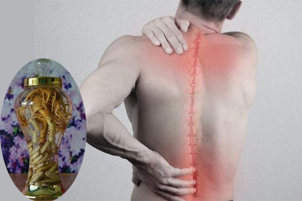 Người lớn tuổi cần chắc khỏe xương, chống đau nhức lưng, xương khớp nên sử dụng vị thuốc này.