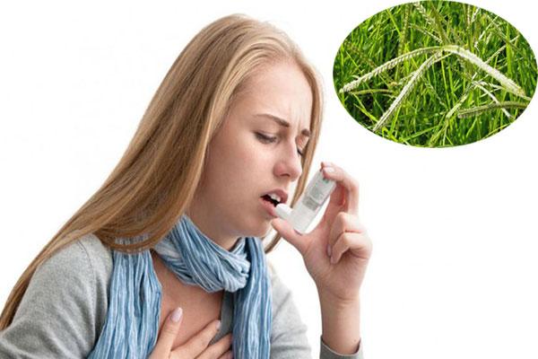 Người mắc các bệnh lý về gan, cao huyết áp, băng huyết sau sinh, đau vú, trẻ em bị rôm sảy, ho suyễn, viêm tinh hoàn ở nam giới,...nên sử dụng loại cây này