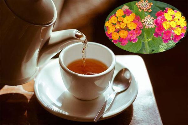Hoa ngũ sắc kết hợp với một vài thảo dược khác có công dụng trị rắn cắn