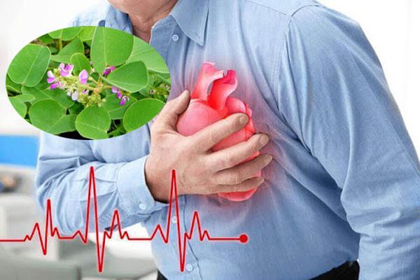 Các hoạt chất có trong dược liệu giúp điều trị hiện tượng nhịp tim đập nhanh
