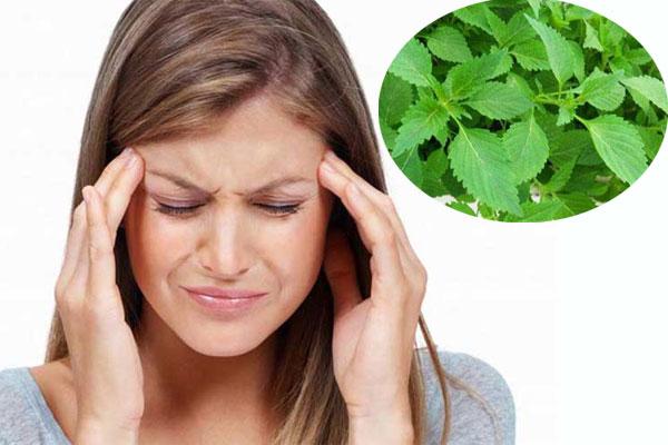 Rau kinh giới có tác dụng chữa chứng bệnh đau đầu