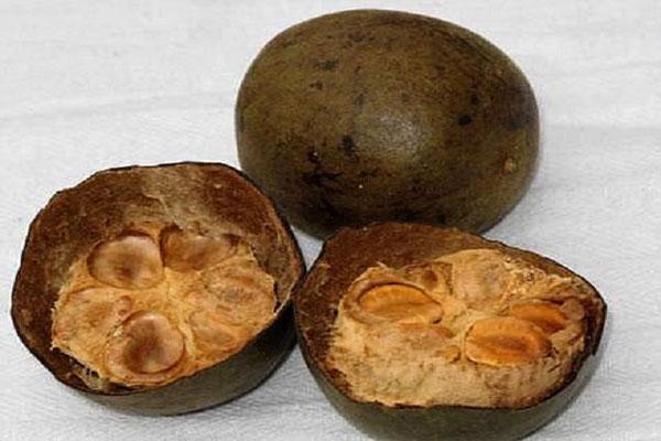 Quả la hán được sấy hoặc phơi khô để dùng làm thuốc