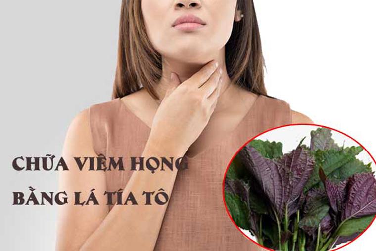 Cách chữa viêm họng hạt bằng lá tía tô