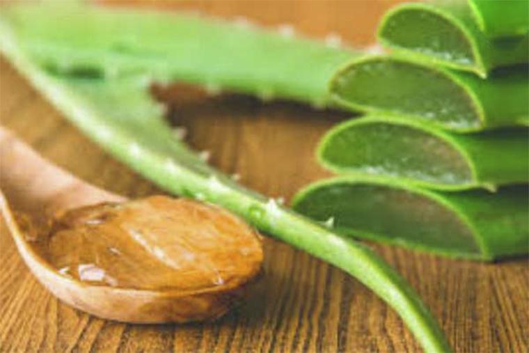 Sử dụng gel lô hội chữa trị mề đay mẩn ngứa